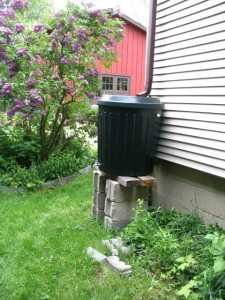 Rain Barrel Installed