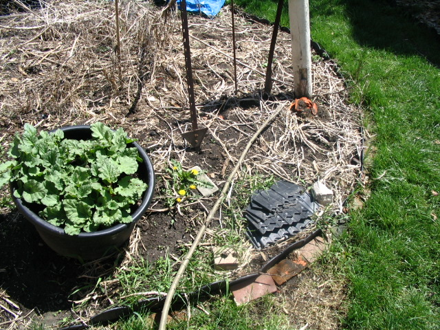 Can You Grow Rhubarb in a Container? - Our Twenty Minute Kitchen ...