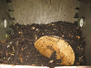 Old Straw Hat in the Compost