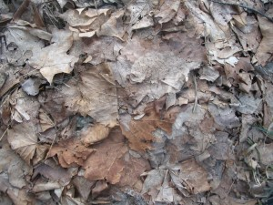 compactedleaves2