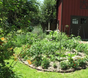 The 20 Minute Garden