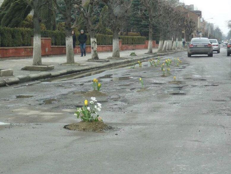 Tulips in Potholes