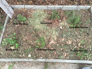 The Sandbox Bed with Labels