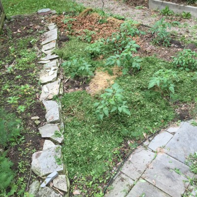 Weeding the Wedge (after mulching with grass clippings)