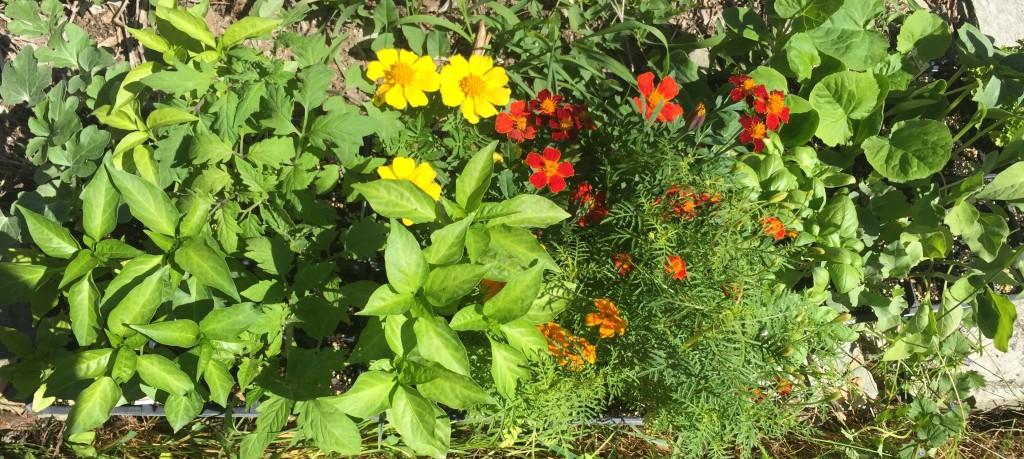 Plant Sets